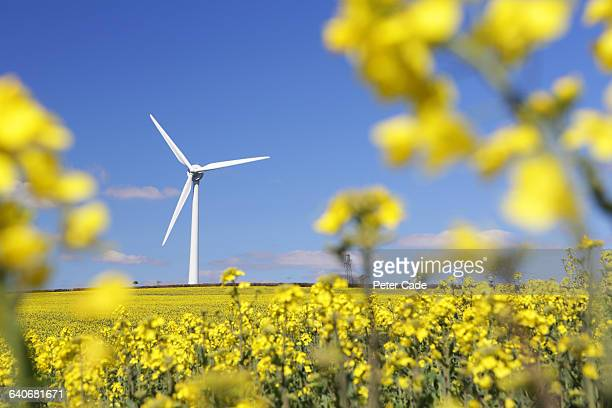 wind turbine in rapeseed field - brassica napus l - fotografias e filmes do acervo