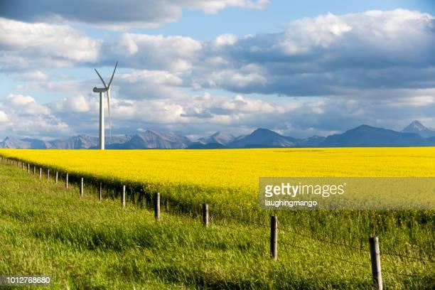 風タービン ピンチャー クリーク アルバータ州 - キャノーラ ストックフォトと画像