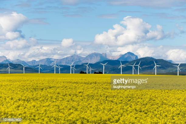 wind turbine renewable energy - alberta stock pictures, royalty-free photos & images