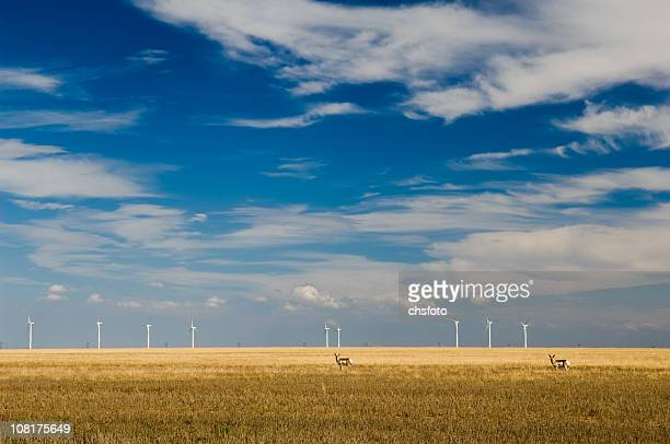 Wind Turbines and Antelope in Large Field