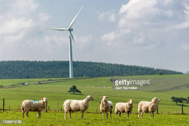 wind turbines and sheep - alain bachellier photos et images de collection