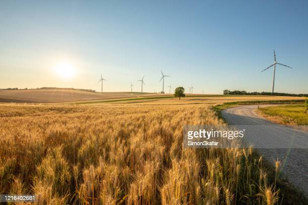 wind turbines and wheat field under sunny sky. - country road stock pictures, royalty-free photos & images