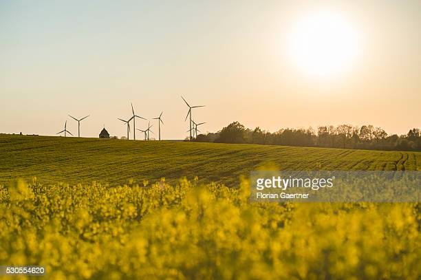 Wind turbines are captured in a field of rape on May 07 2016 in Reichenbach Germany