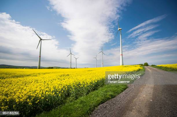 Wind turbines in a field of rape are pictured on April 30 2018 in Schoepstal Germany