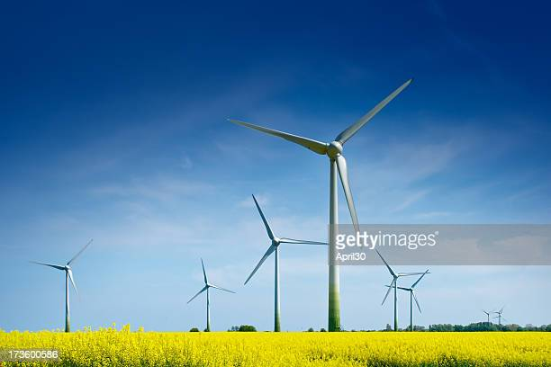 wind turbines in a rape field - windenergie stockfoto's en -beelden