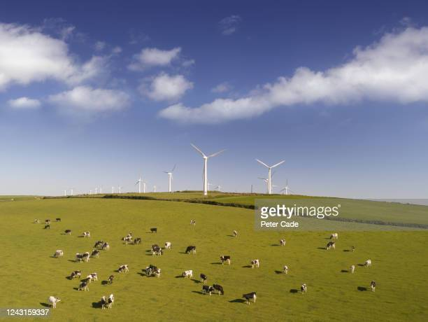 wind turbines in countryside - agriculture stock pictures, royalty-free photos & images