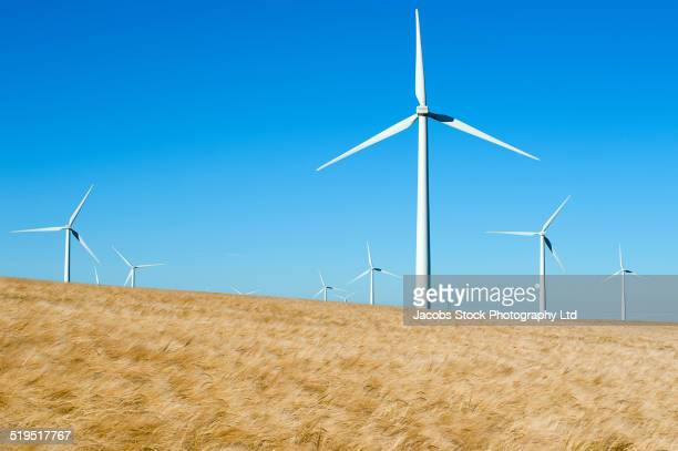 wind turbines in field under blue sky - groupe moyen d'objets photos et images de collection