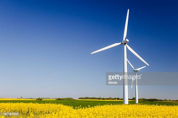 Wind turbines in yellow field. Sustainable energy. Polarized blue sky.