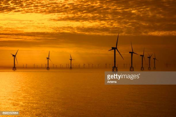 Wind turbines of the Thorntonbank Wind Farm offshore windfarm off the Belgian coast in the North Sea at sunset