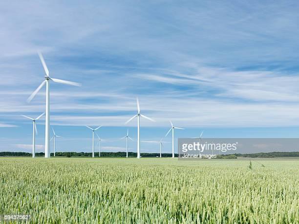 Wind turbines on wheat field