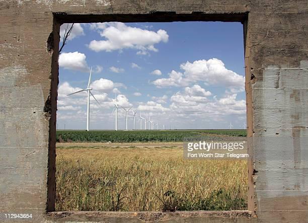 Wind turbines sit in a field of milo in Nolan Texas