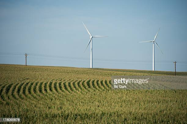 Wind turbines spin above corn fields near Carroll Iowa on Monday Aug 26 2013