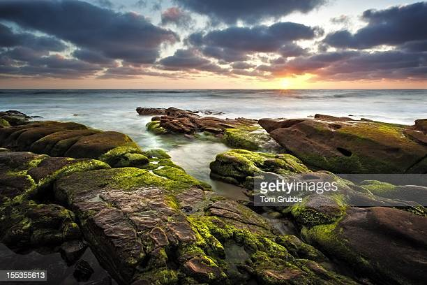 windansea beach - tom grubbe stock pictures, royalty-free photos & images
