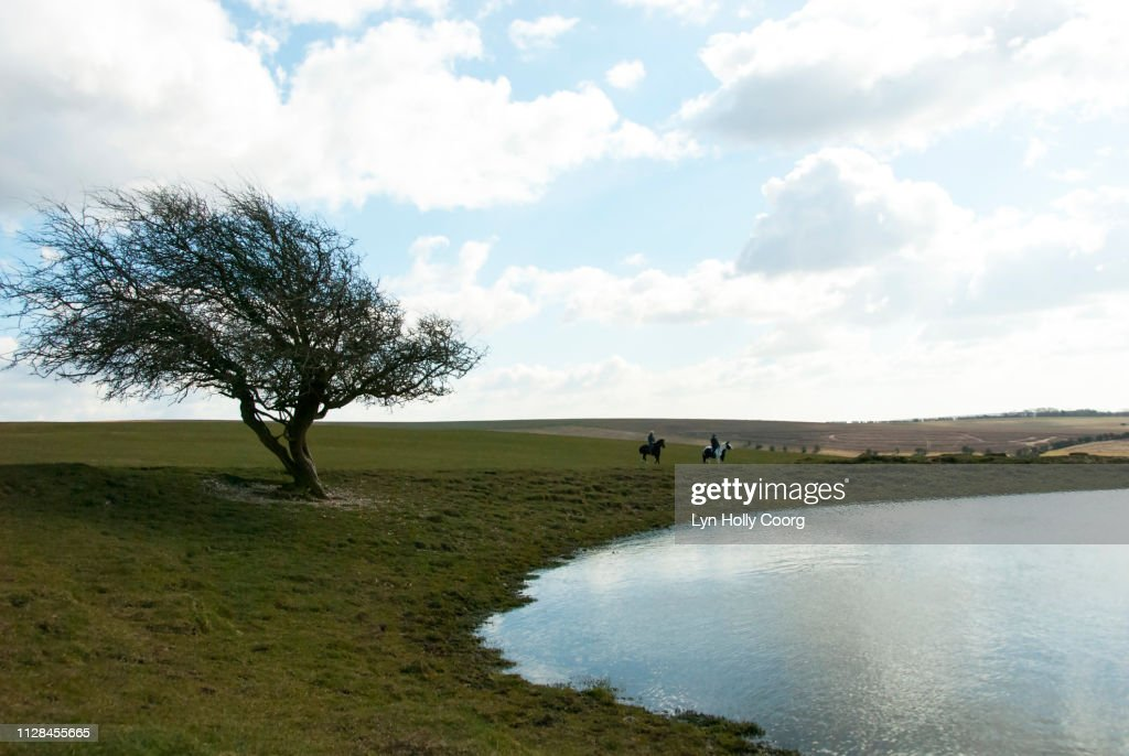 Windblown bare tree by lake in British countryside : Stock Photo