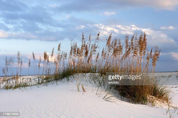 Wind-blown dunes