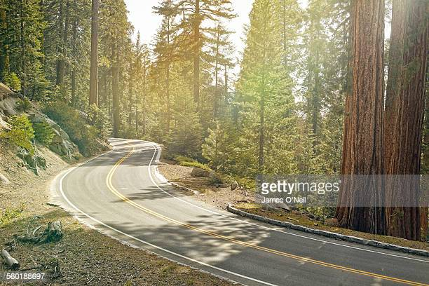 winding american road in sequoia national park