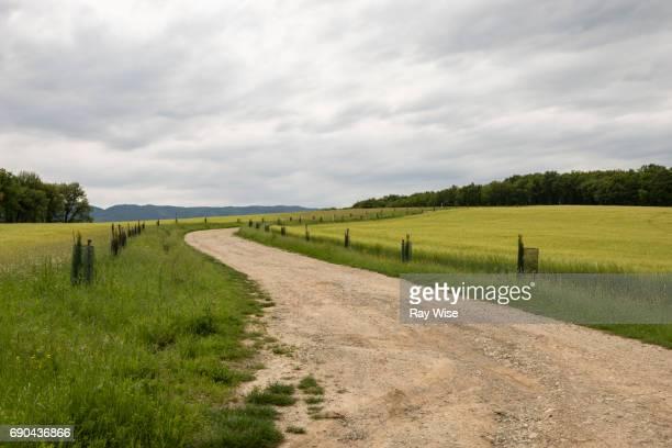 winding country road at lake bilancino, tuscany, italy. - erba foto e immagini stock