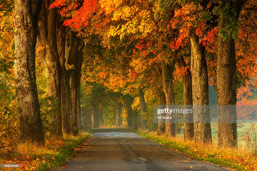 Image result for images country road