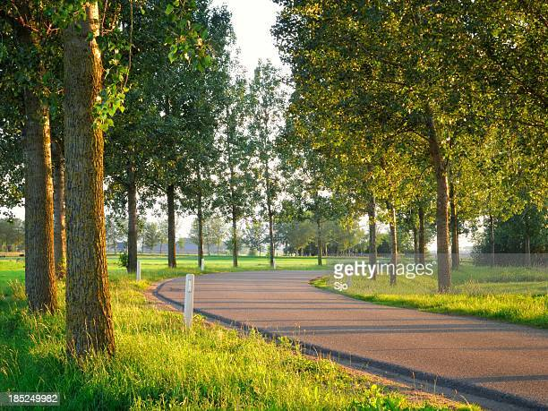 winding country road - overijssel stock pictures, royalty-free photos & images