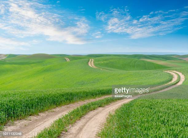 winding dirt road through farmland - rolling landscape stock pictures, royalty-free photos & images