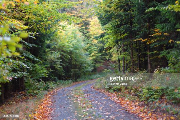 Winding forest country road, lush foliage, autumn coloured leaves