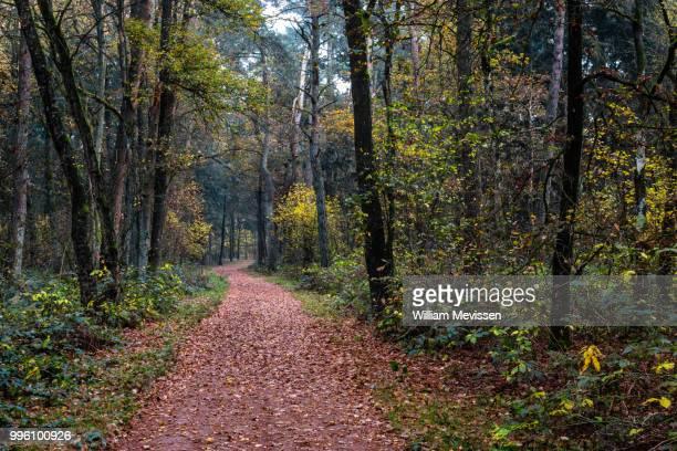 winding forest path - william mevissen stockfoto's en -beelden
