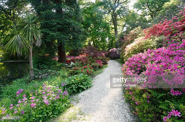 winding garden path. - hampshire england stock pictures, royalty-free photos & images