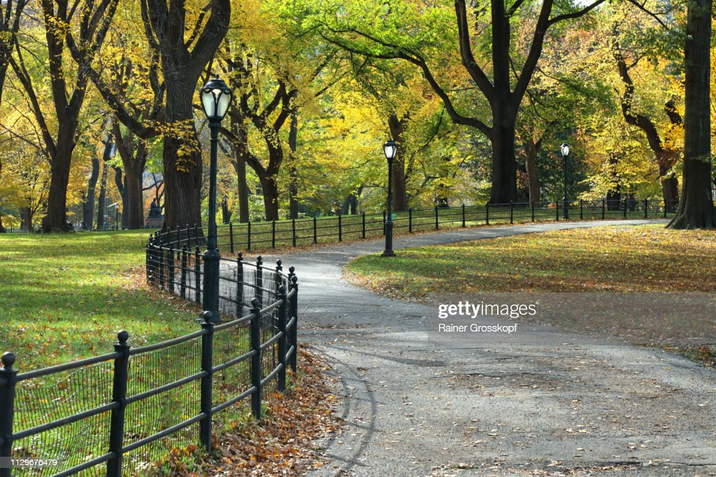 Winding Path in Central Park in Autumn : Stock-Foto