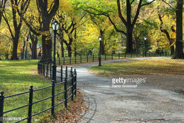 winding path in central park in autumn - rainer grosskopf stock pictures, royalty-free photos & images