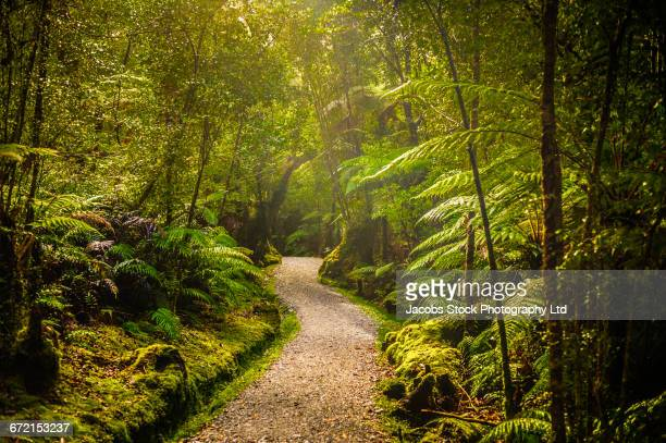 Winding path in lush green forest