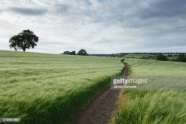 winding path - footpath stock pictures, royalty-free photos & images