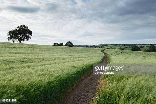 winding path - sentiero foto e immagini stock