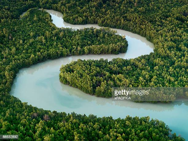 a winding river in johor, indonesia.  - curve stock pictures, royalty-free photos & images