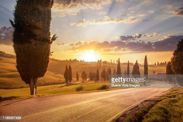 winding road among cypresses. - val d'orcia stock pictures, royalty-free photos & images
