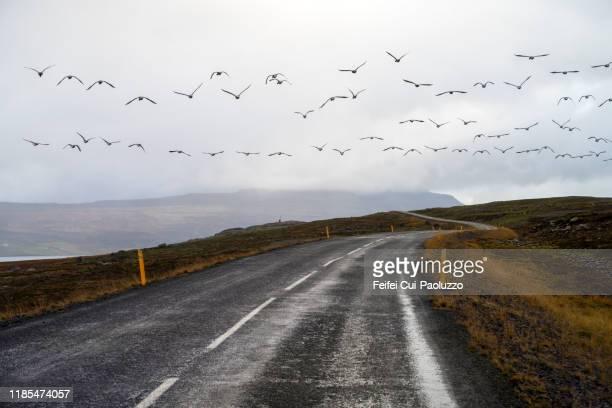 winding road at reydarfjördur, eastern iceland - austurland stock-fotos und bilder