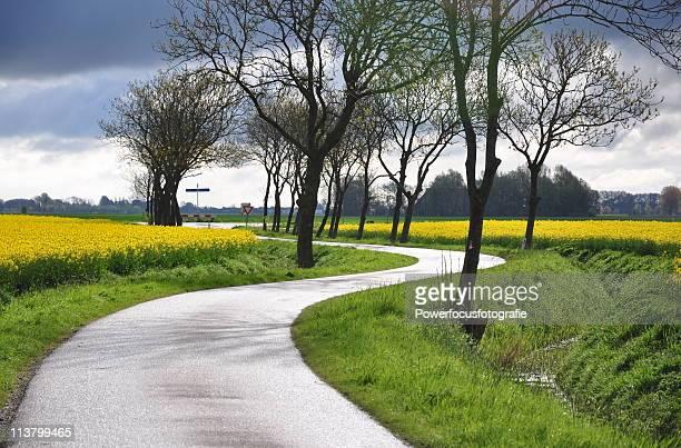 winding road in colza fields - crucíferas - fotografias e filmes do acervo