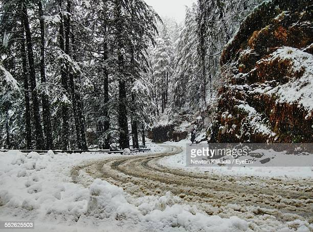 winding road in forest at winter - shimla stock pictures, royalty-free photos & images