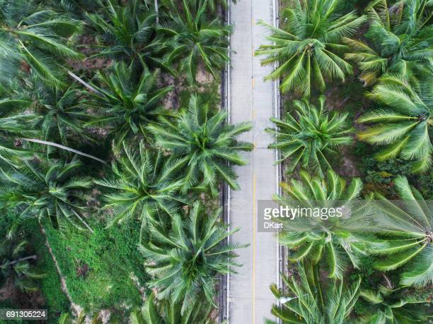 winding road in thailand - letter s stock photos and pictures