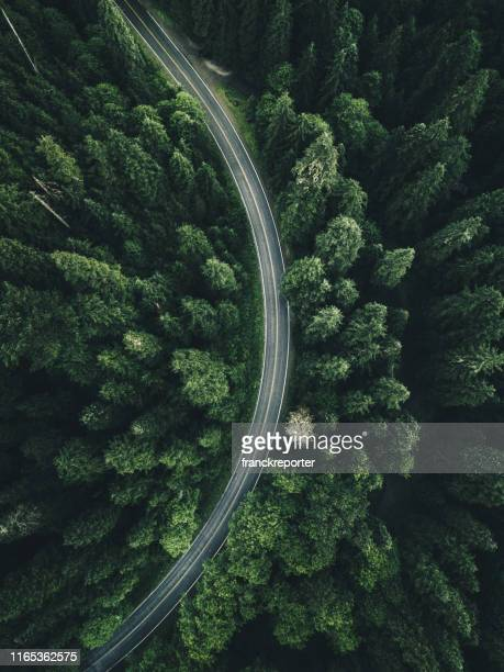 winding road in the forest on north america - environmental issues stock pictures, royalty-free photos & images