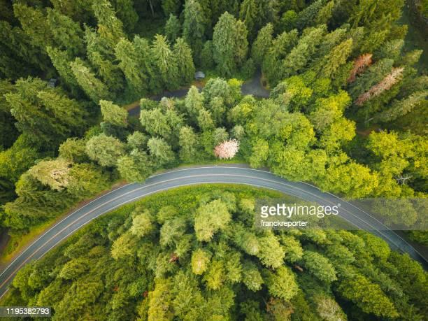 winding road in the forest on north america - pineta foto e immagini stock
