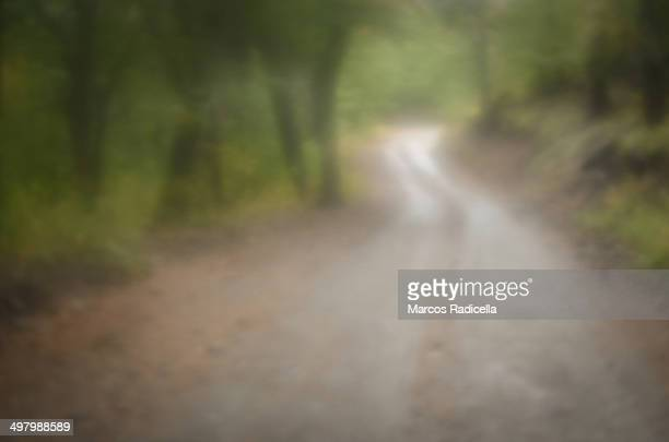 winding road in the forest - radicella stock photos and pictures
