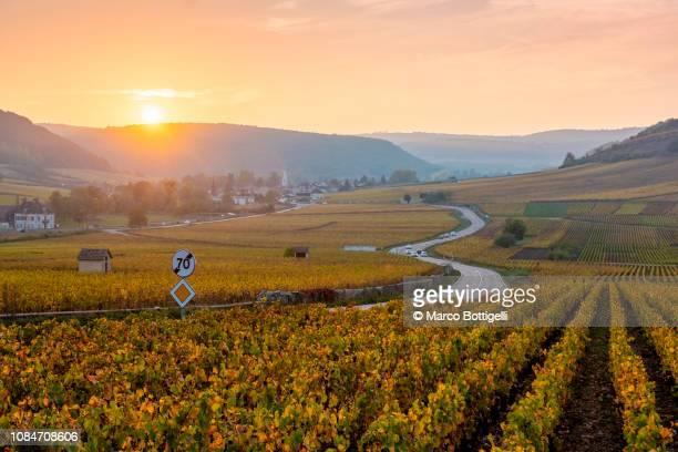 winding road in the vineyards at sunset, burgundy, france - côte d'or bildbanksfoton och bilder