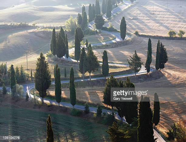 winding road lined with cypress trees - yeowell stock pictures, royalty-free photos & images