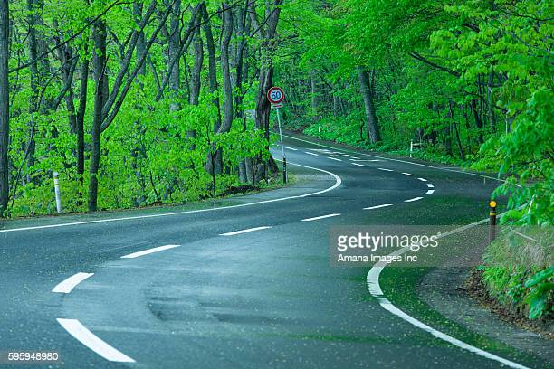 Winding Road through Fresh Green Forest