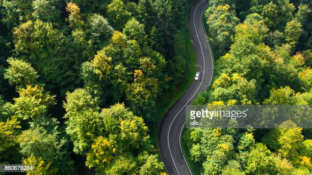 winding road through the forest - thoroughfare stock pictures, royalty-free photos & images