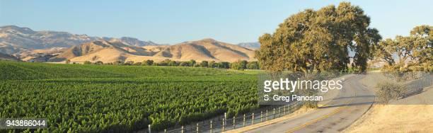 camino sinuoso + viña - panorámica - santa barbara california fotografías e imágenes de stock