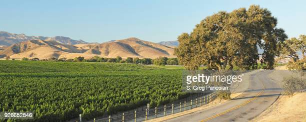 winding road + vineyard - summer - los olivos california stock pictures, royalty-free photos & images