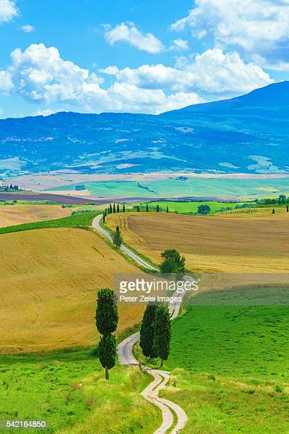 winding road with cypress trees in tuscany, italy - italian cypress stock photos and pictures