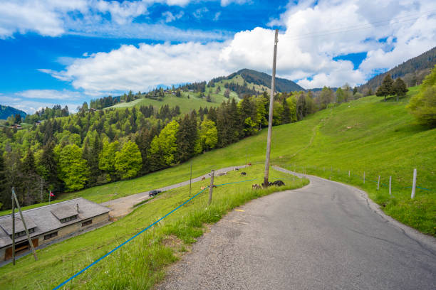 Winding Road with switchbacks  accross alpine meadows near village of Les Avants, near Montreux.  Cow stable on left.