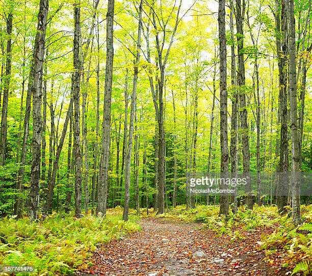 Winding trail Autumn forest nature background